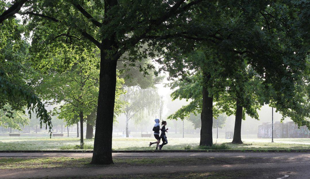 jogging,park,green