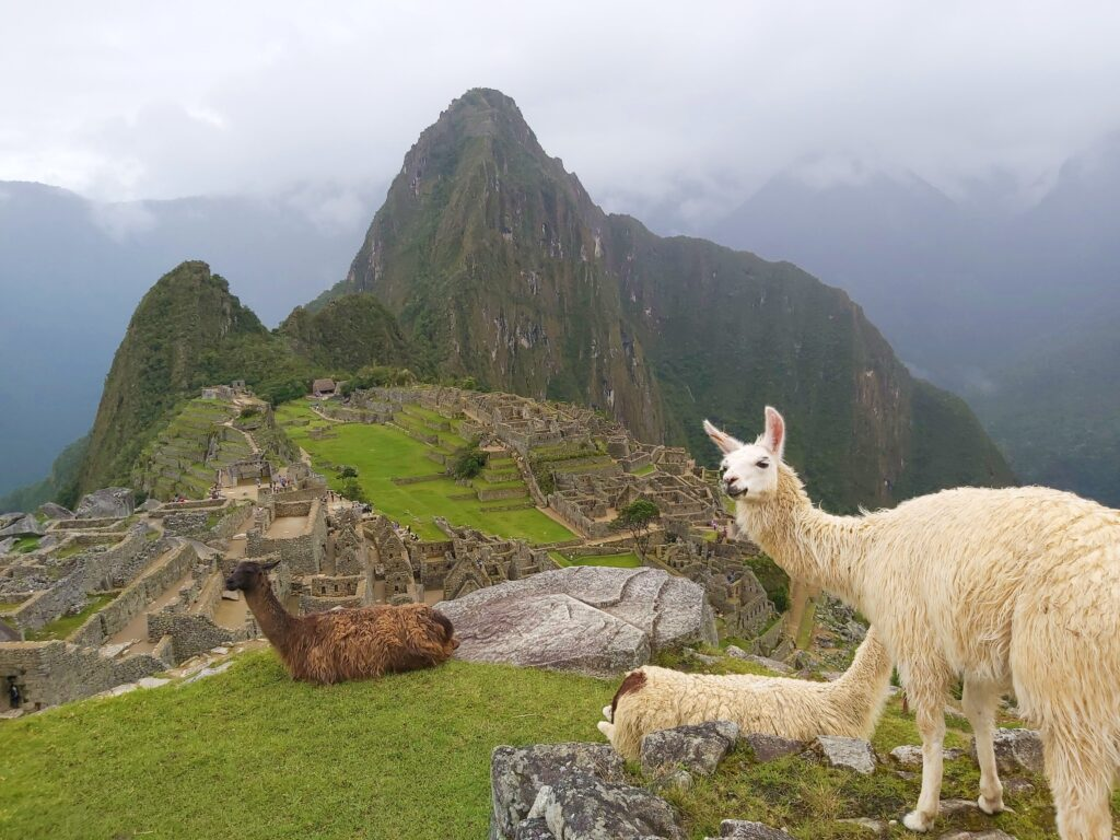 Machu Picchu, známé a turisty navštěvované místo. V popředí tři lamy.