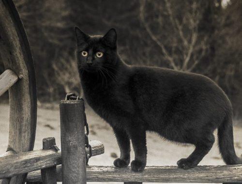černá kočka na ulici