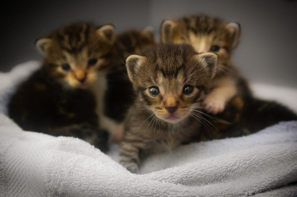 Čtyři malá koťátka, zvědavě koukající do objektivu.