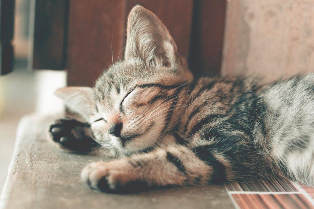 Mourovaté koťátko, spící na hnědém schodu.