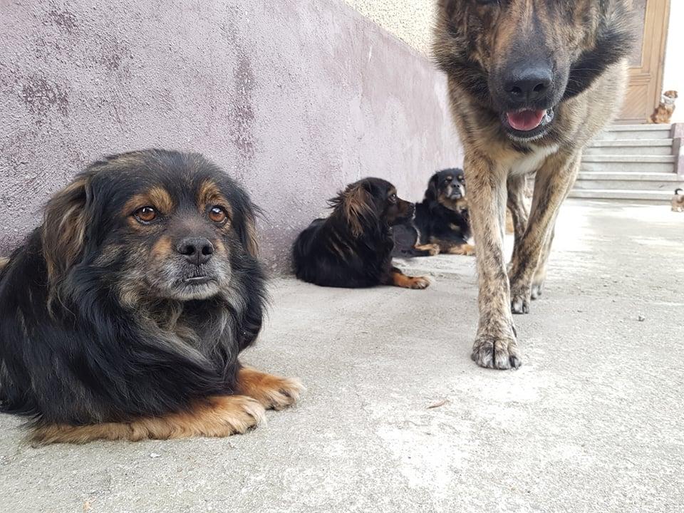 Několik místních psů.