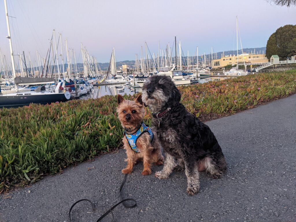 Blančini dva pejsci s výhledem na jachty v přístavu.