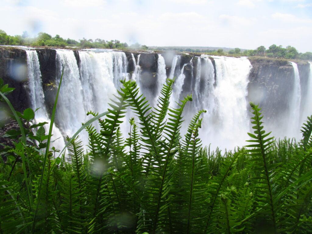 Viktoriiny vodopády, na popředí zelené kapradiny.