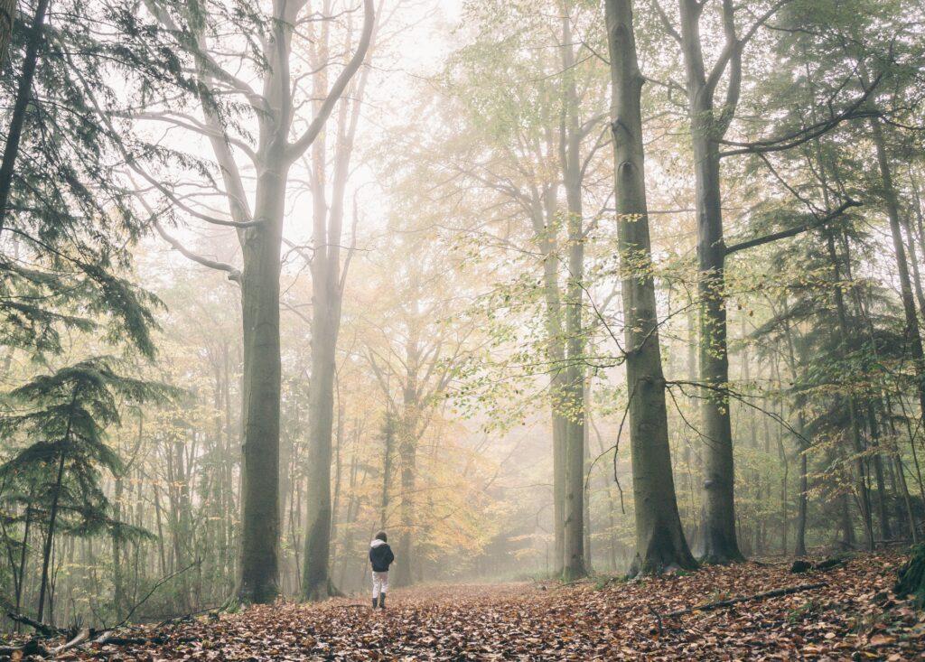 procházka v podzimním lese